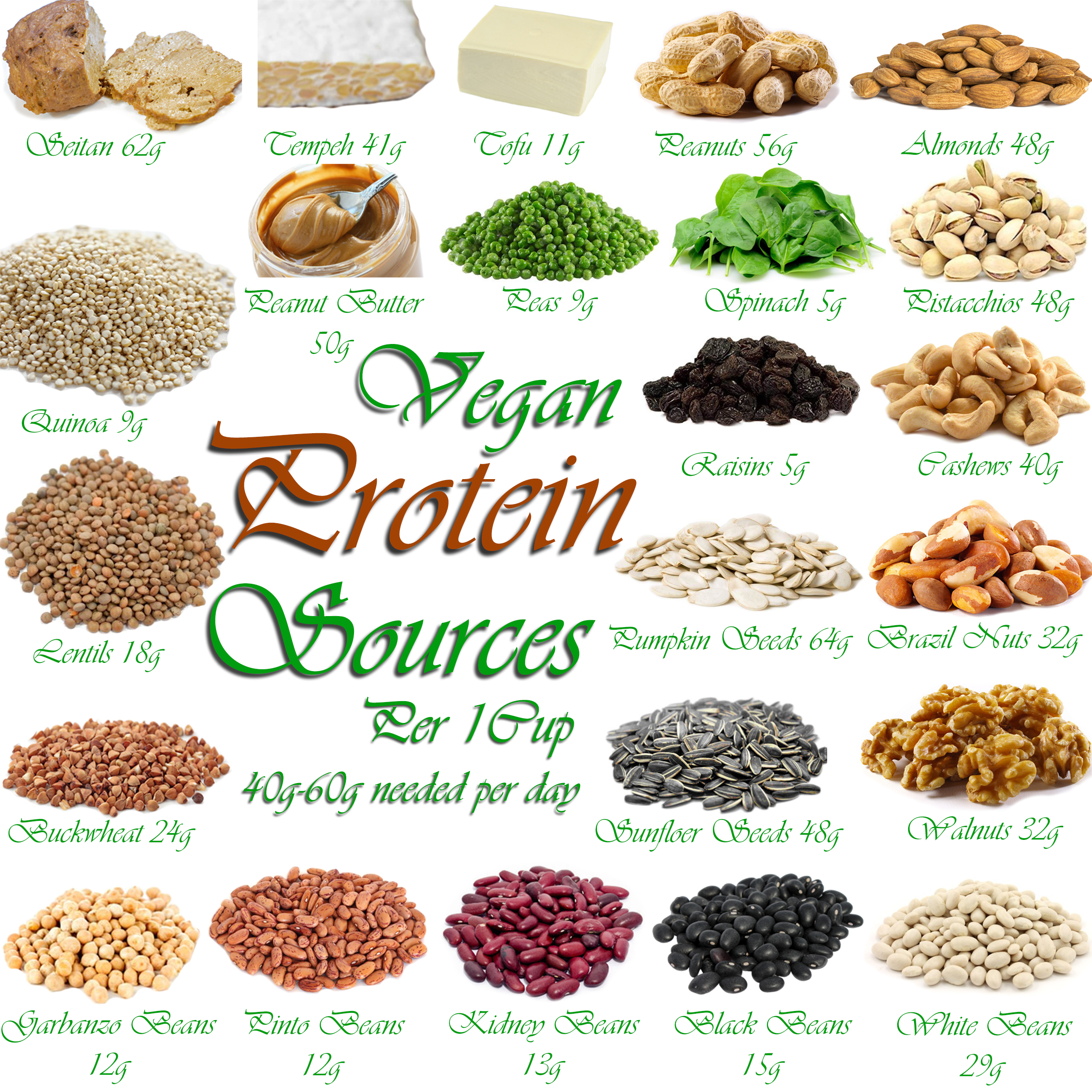 AterImber.com - The Veg Life - Vegan Tips - Where Do Vegans Get Their Protien Collage - vegan food, vegan nutrients, vegan facts