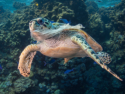 AterImber.com - The Veg Life - Vegan Tips - Non-Vegan Ingredients in Non-Food - Sea Turtle Eating Plastic Bag - single use plastics - save the ocean