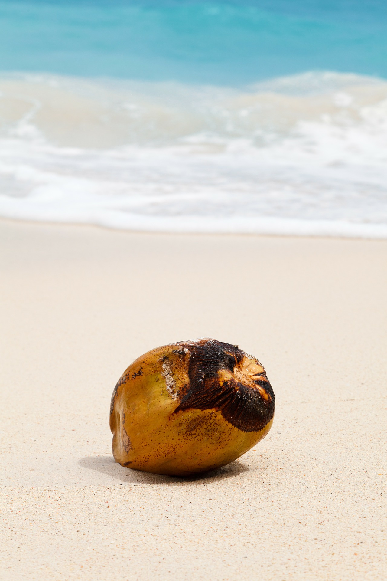 AterImber.com - Writing - Writing Tips - PHSH Effect Series - Removing a Background Object - Beach Coconut - phsh tutorial, photoshop tutorials, photoshop effects