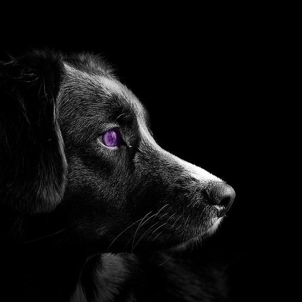 AterImber.com - Writing Tips - PHSH Effect Series - Changing Eye Colour - Purple Eye - phsh effect, phsh tutorial, phsh help, writing help